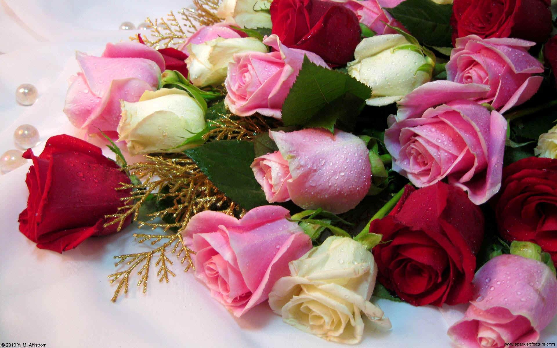 Roses Wallpaper 693584