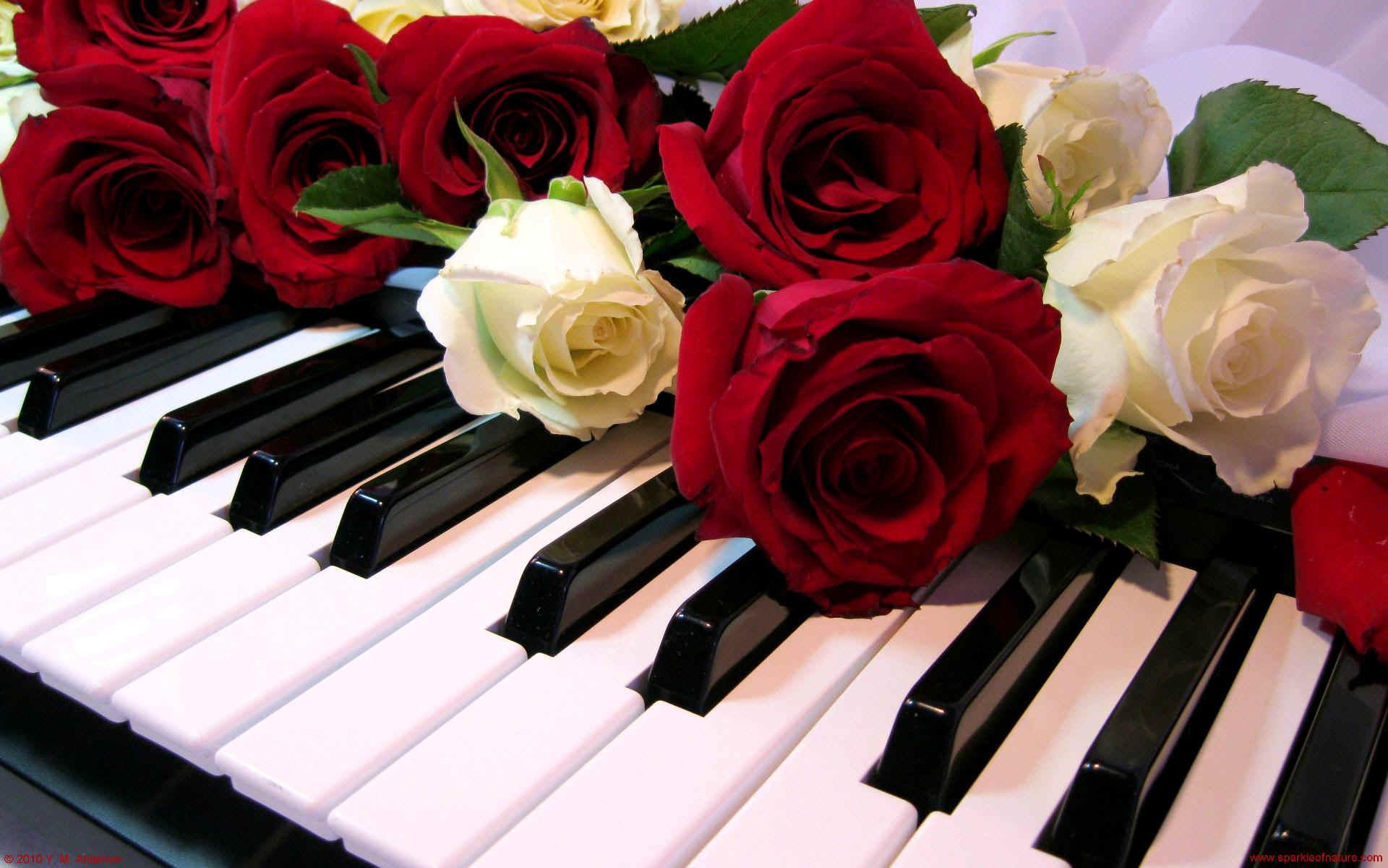 Resultado de imagen de imágenes gratis de rosas