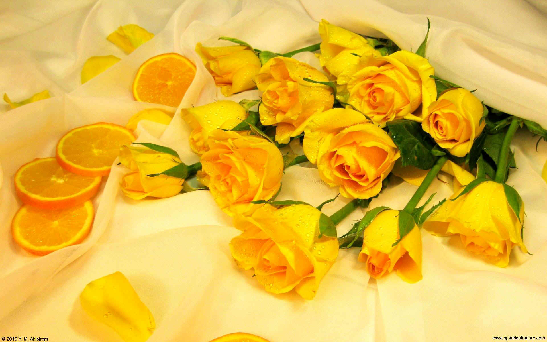 wallpaper of yellow roses - photo #38