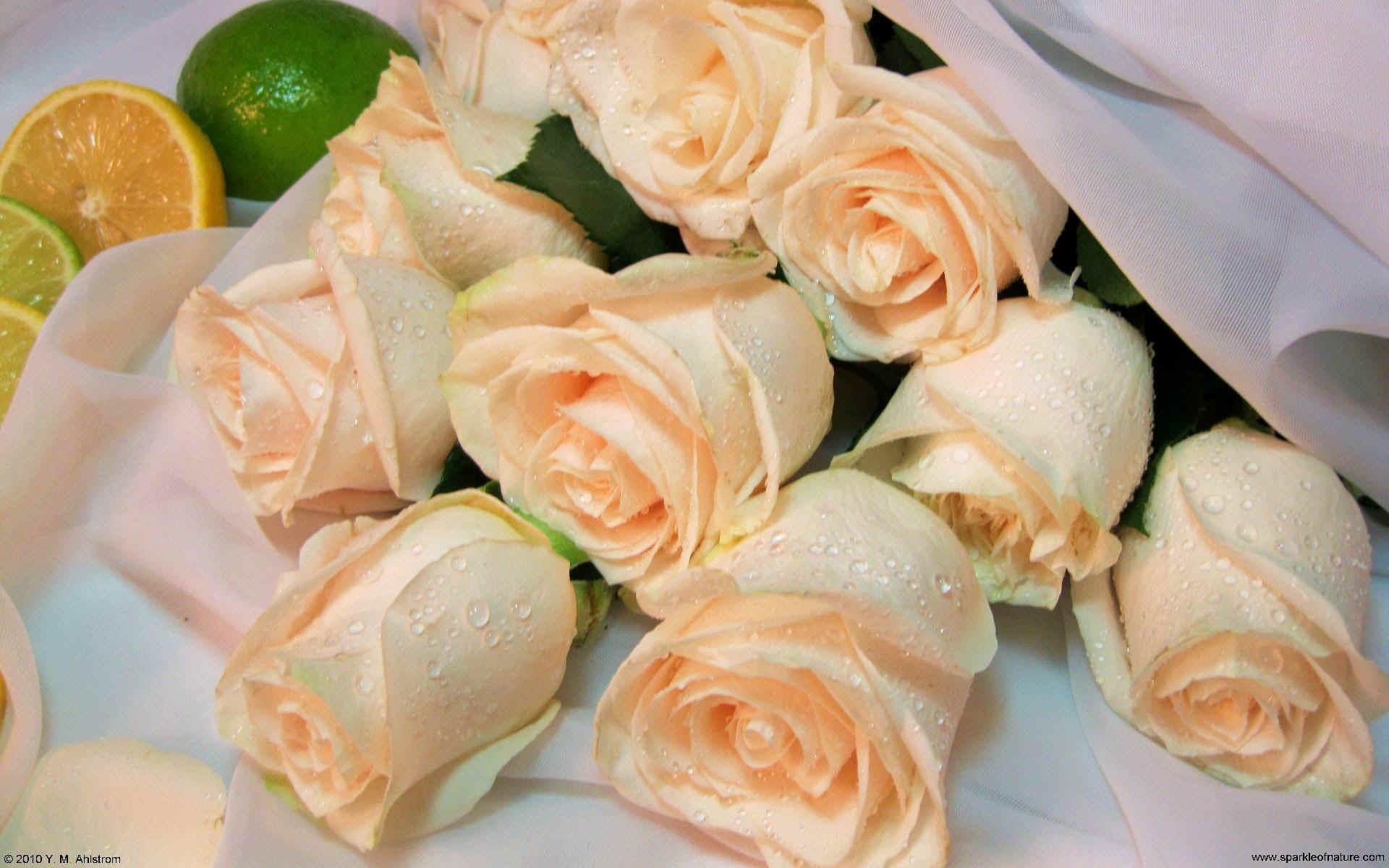 Elegant yellow roses wallpaper 693617 for Cream rose wallpaper