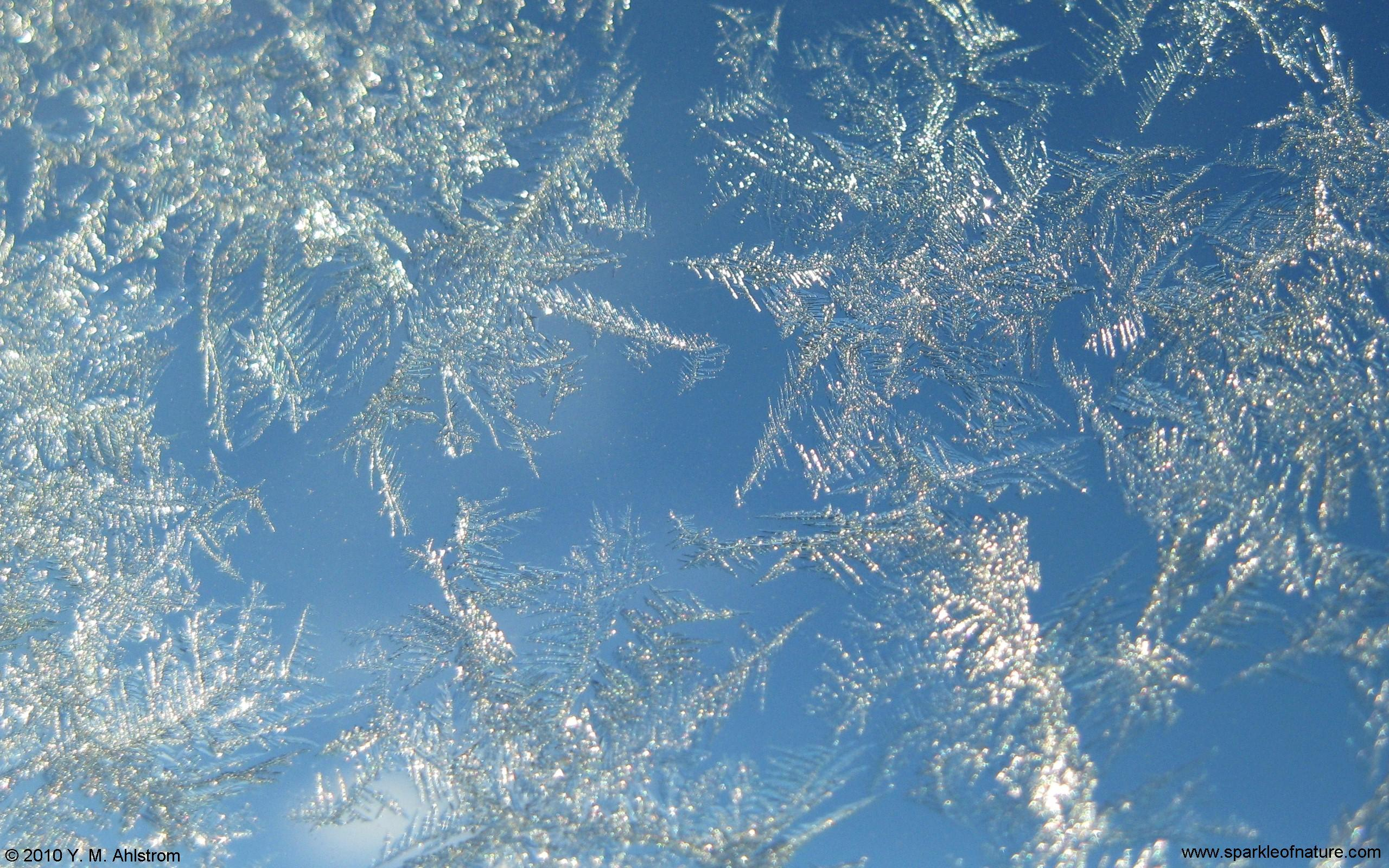 Frost wallpaper 1079123 - Photo of wallpaper ...